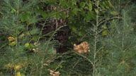 Bigfoot Cam